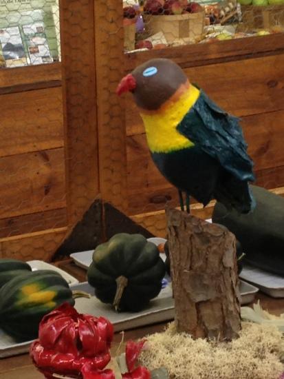tropicalbird