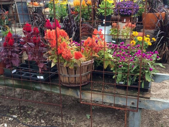 Flowers at Pettengill Farm